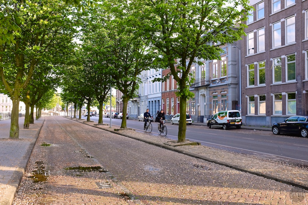 Biking Downtown - Breda, Netherlands