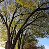 Backlit Trees - Cupertino, California
