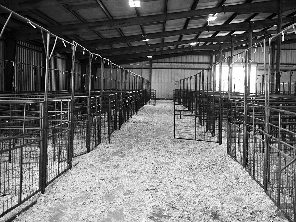 2017 Livestock Show, Rodeo Austin - Austin, Texas