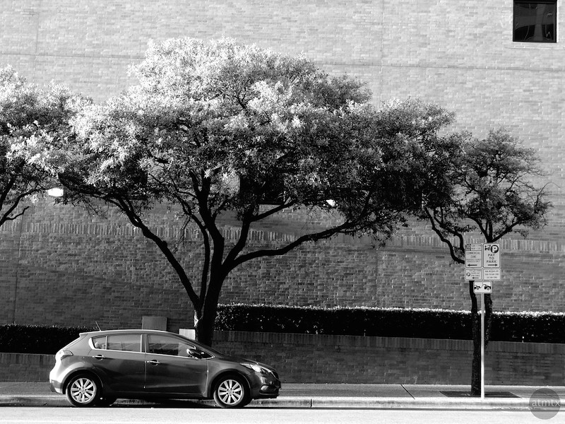 The tree and the hatchback - Austin, Texas