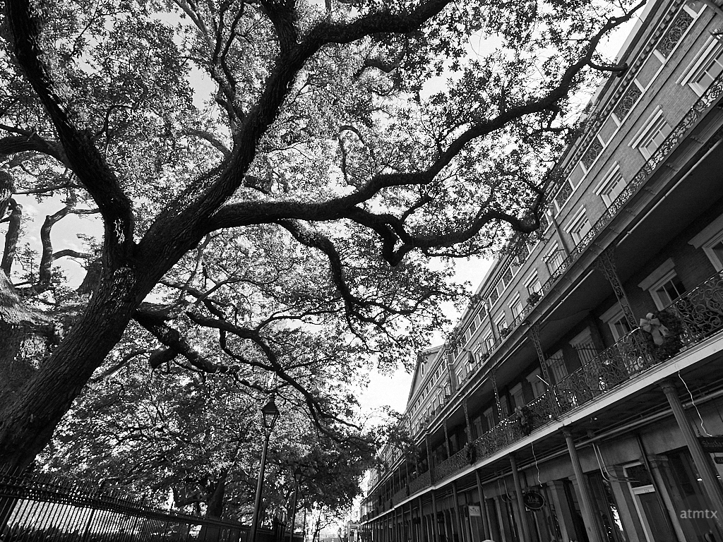 Tree, Jackson Square - New Orleans, Louisiana