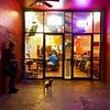 Curious Dog, Guadalupe Street - Austin, Texas