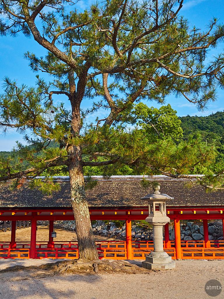 The Pine Tree and Lantern - Miyajima, Japan