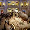 Rotunda Bustle, Smithsonian Natural History Museum - Washington DC