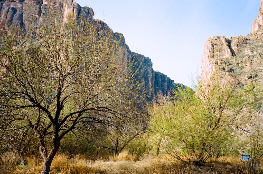 Trees, Santa Elena Canyon - Big Bend National Park, Texas