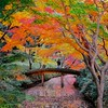 The Landscape Photographer, Rikugien Garden- Tokyo, Japan