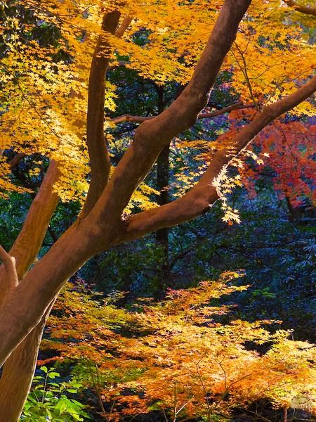 2014 Rikugien Garden Fall Color #4 - Tokyo, Japan