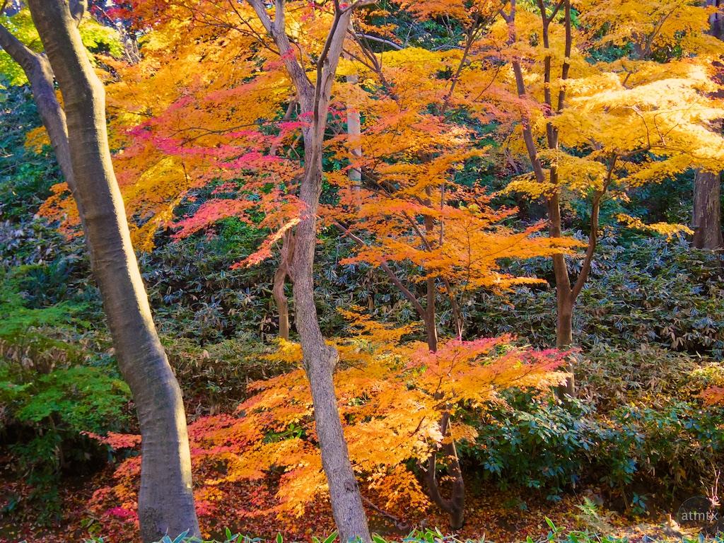 2014 Rikugien Garden Fall Color - Tokyo, Japan