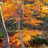 2014 Rikugien Garden Fall Color #1 - Tokyo, Japan