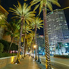 Palm Trees on Canal Street - New Orleans, Louisiana