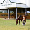 Scene #23,  Great Southwest Equestrian Center - Katy, Texas