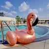 Flamingo and Pool, Archer Hotel - Austin, Texas