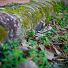 Mossy Curb - Smithville, Texas