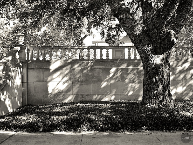 Tree with Classic Architecture, University of Texas - Austin, Texas