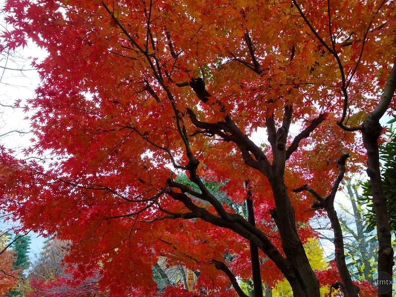 A Neighborhood Park #3 - Tokyo, Japan