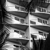 Hawaiian Texture - Honolulu, Hawaii