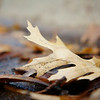 Fallen Leaves - Austin, Texas