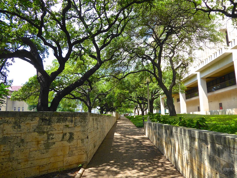 Live Oaks and the Ransom Center, University of Texas - Austin, Texas
