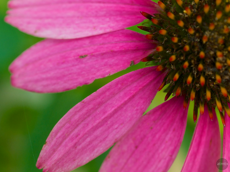 Flower Macro #3, Zilker Botanical Gardens - Austin, Texas