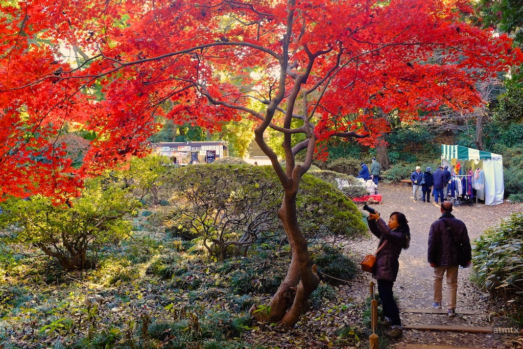 Shooting the Fall Color in Rikugien - Tokyo, Japan