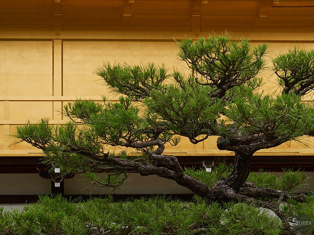 Bonsai Like - Kyoto, Japan