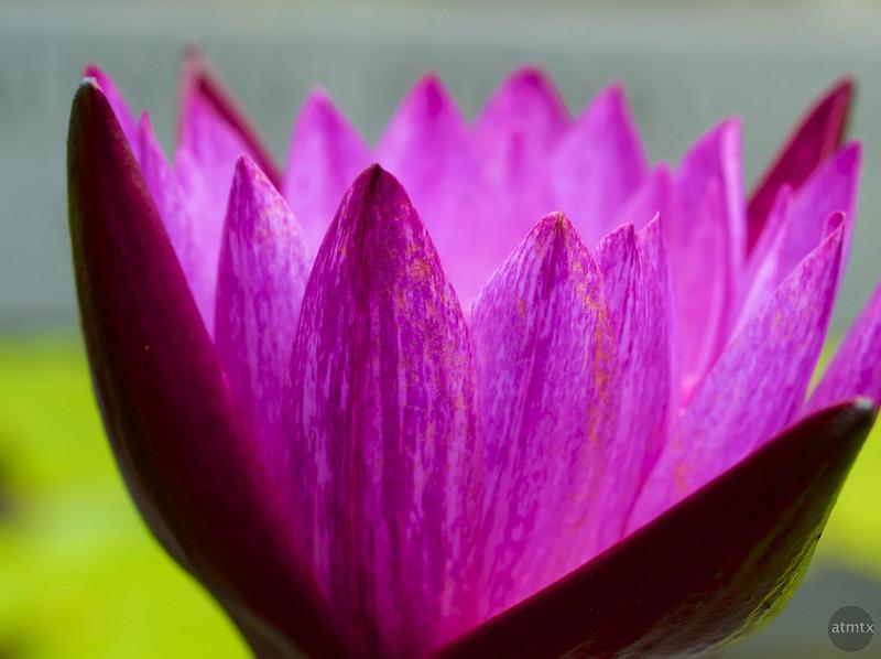 Flower Macro #1, Zilker Botanical Gardens - Austin, Texas