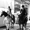 Scene #14,  Great Southwest Equestrian Center - Katy, Texas