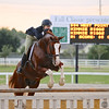 Scene #28,  Great Southwest Equestrian Center - Katy, Texas