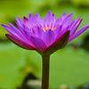 Flower Macro #9, Zilker Botanical Gardens - Austin, Texas