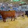 2014 Rodeo Austin #4 - Austin, Texas