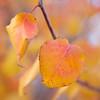 Autumn Colors - Austin, Texas