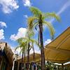 Palm Trees, Cancun Airport - Cancun, Mexico