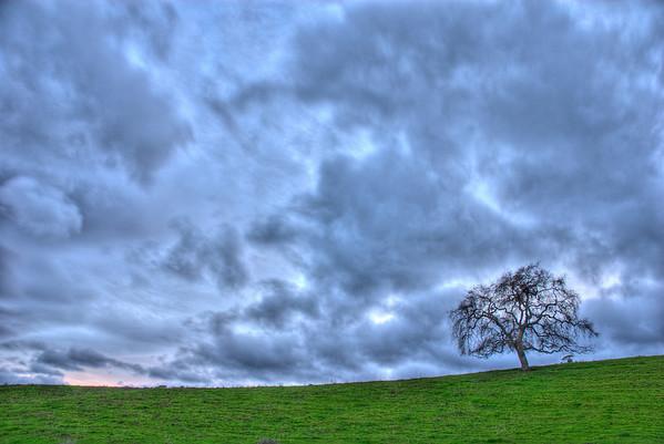 017|Weathered Oak