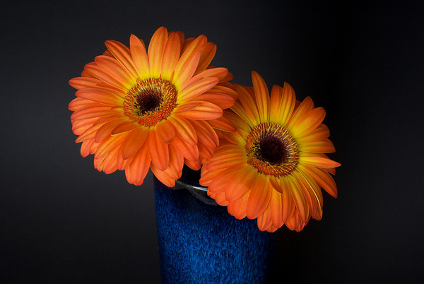 015|Orange Burst