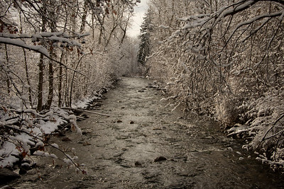 Winter at Rattlesnake Creek
