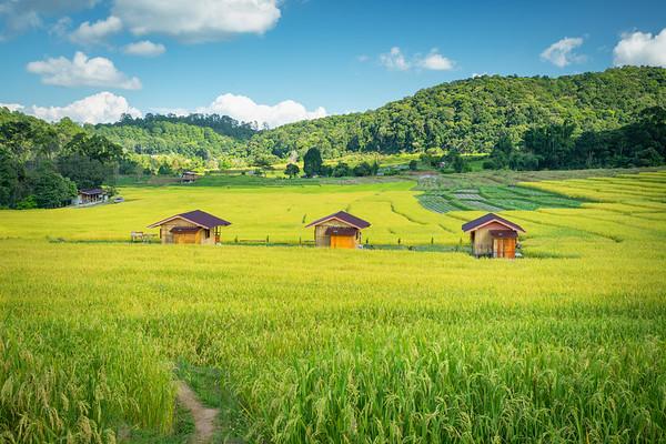 Rice Huts