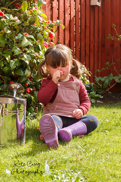 Preschool girl in pigtails, sniffing a flower in the garden, Musselburgh.