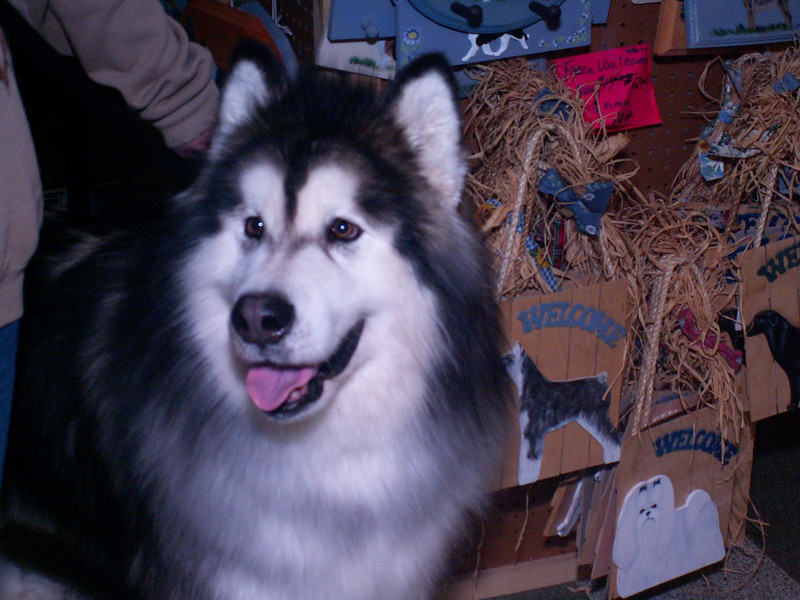 "Alaskan Malamute at the Chicagoland Family Pet Expo in 2005.  Article: <a href=""http://www.windypundit.com/archives/2005/03/pet_show.html"">Pet Show</a>"