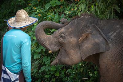 Elephant Joking