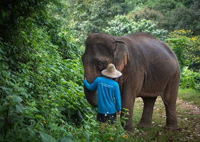 Mahout Leads the Feeds