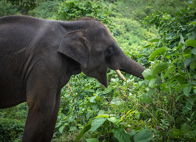 Jungle Feeding Wide VIew