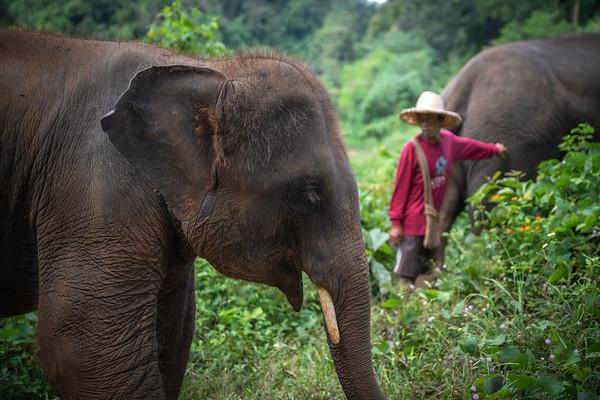 Feeding in the Jungle Profile