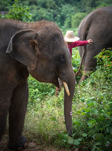 Jungle Feeding Portrait