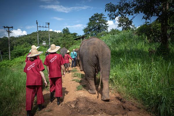 Elephant Walk Begins