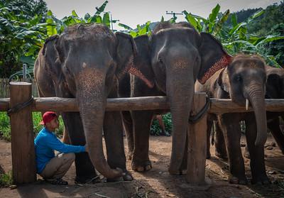 Elephants Waiting Patiently