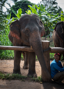 My New Girl and Her Mahout