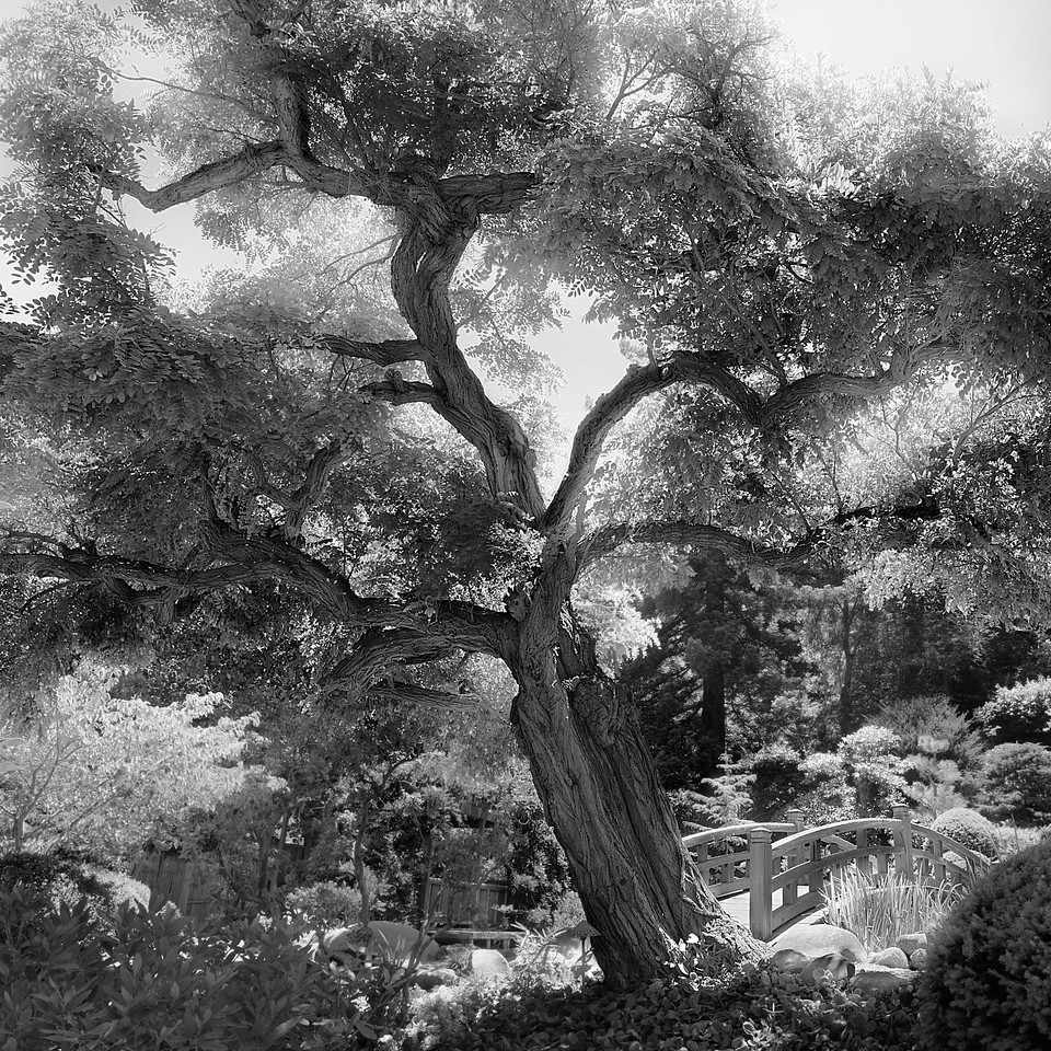 Life in Mono  I recently found out that my camera has a monochrome setting and I have been going mono-happy.  I took my new found affinity for a whirl at the Saratoga Hakone Gardens with the intent to see if photos look as compelling in black and white as they do in color.  Yup, they do. =)
