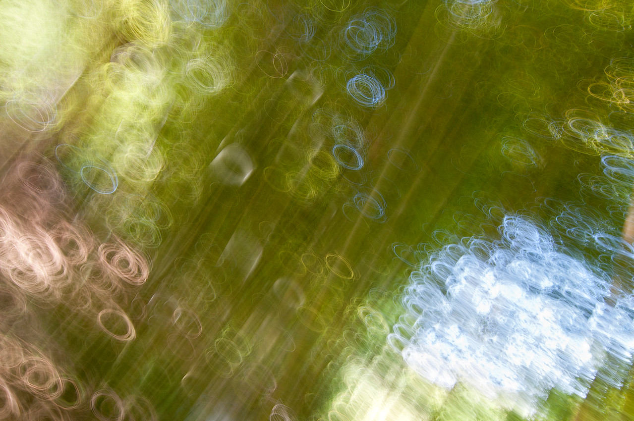 Impression, Bamboo Forest - Primera