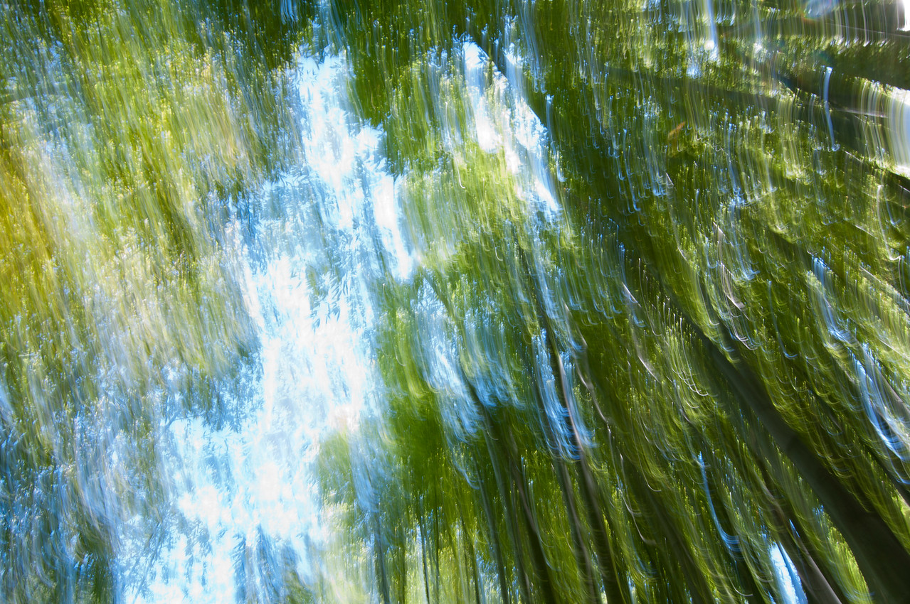 Impression, Bamboo Forest - Segunda  About This Collection  This collection of photographs was the result of a happy mistake while walking through the Hakone Garden's bamboo forest in Saratoga. I was messing around with my camera on manual mode, trying different angles and motions when I noticed the resulting images resembled impressionist paintings.  I liked how the bamboo forest was implied though color, light and movement, so I sat there for a while and tried different things until I got the look I wanted.  All of these photographs are single shots with very minor adjustments in Photoshop.