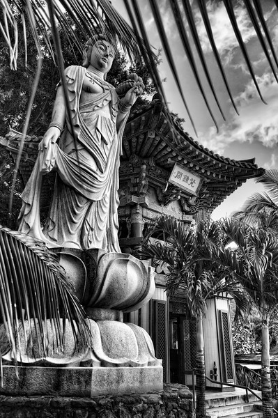 The Lotus Buddha